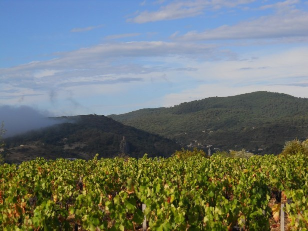 tour-guisquet vingård